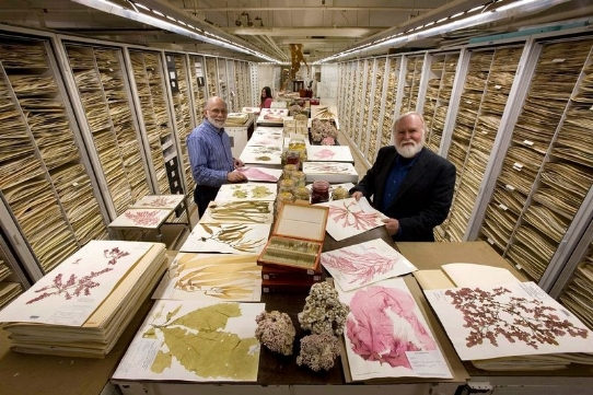 One of the Smithsonian Institute's bio-collection libraries, in this case plant specimens. Altogether the Smithsonian has 140 million distinct artifacts worthy of examination.