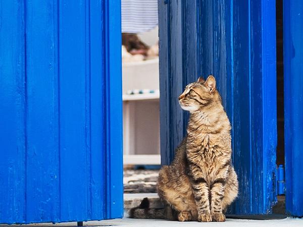 Chat et porte grecque. Crédits photo : Shutterstock