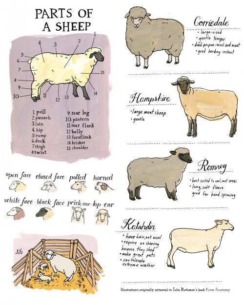 Edible Traditions: Lamb — Edible Boston