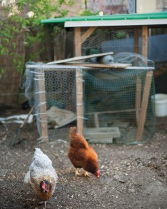 Chickens_Coop