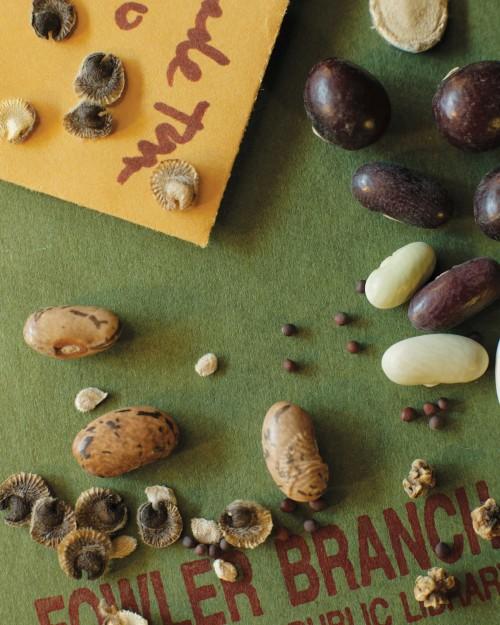 Seeds_Seeds