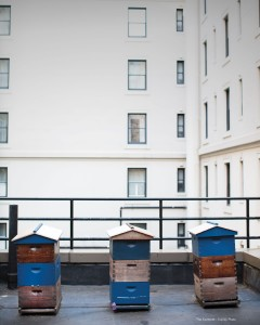 Rooftop-Hives