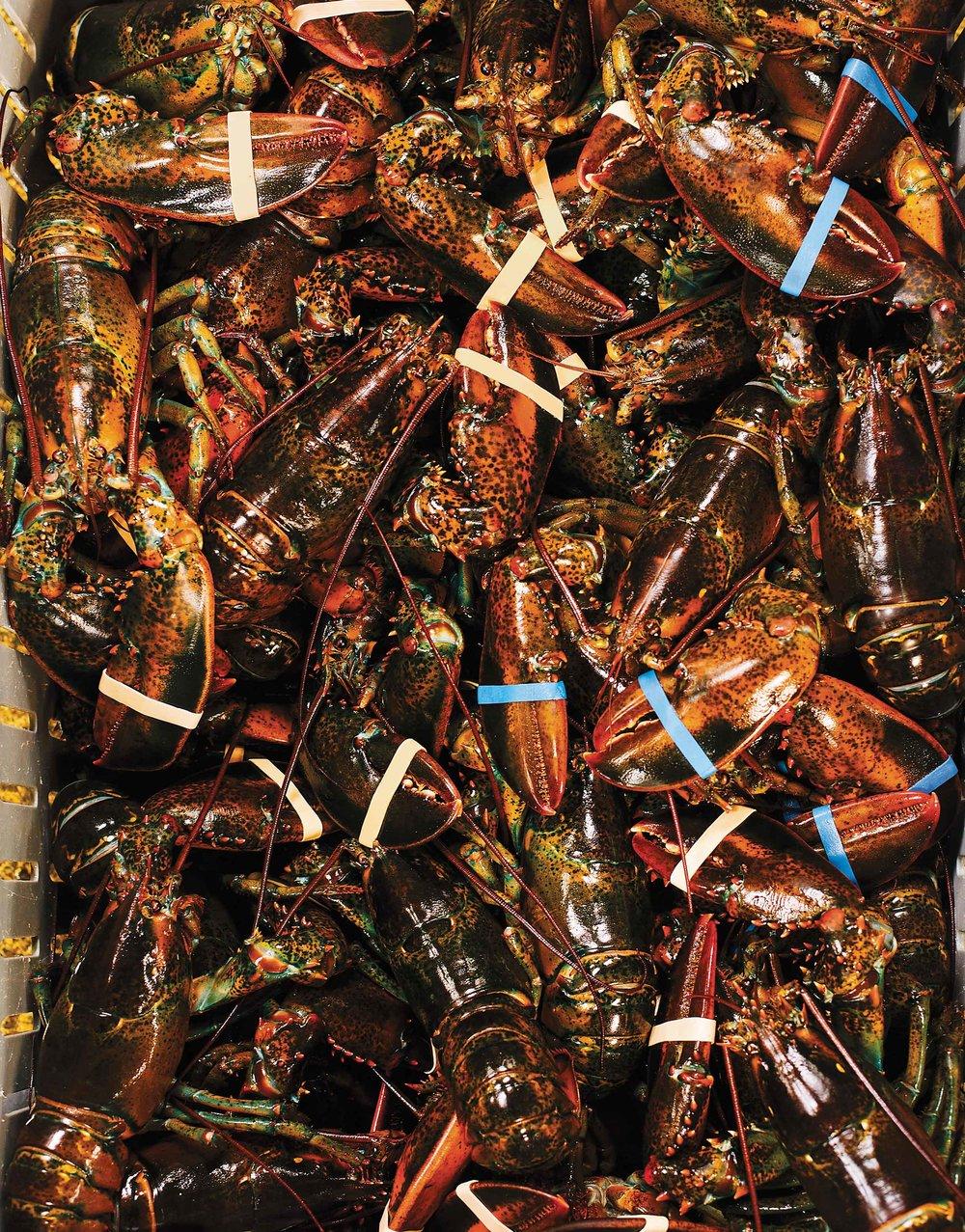 Lobsters2