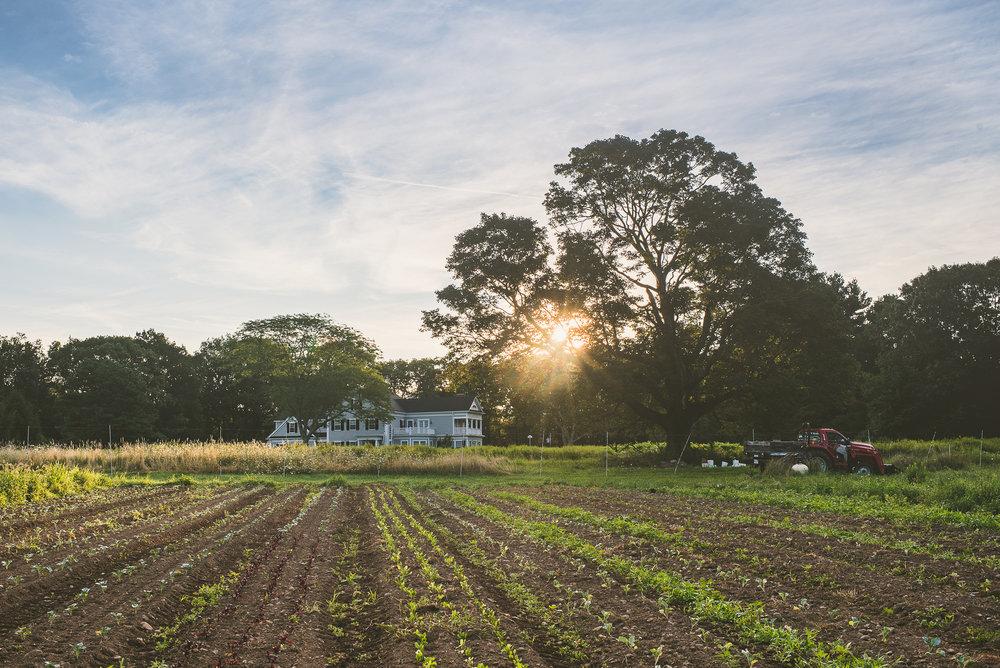 Eustis Estate Farm - Edible Boston-8_WEB.jpg