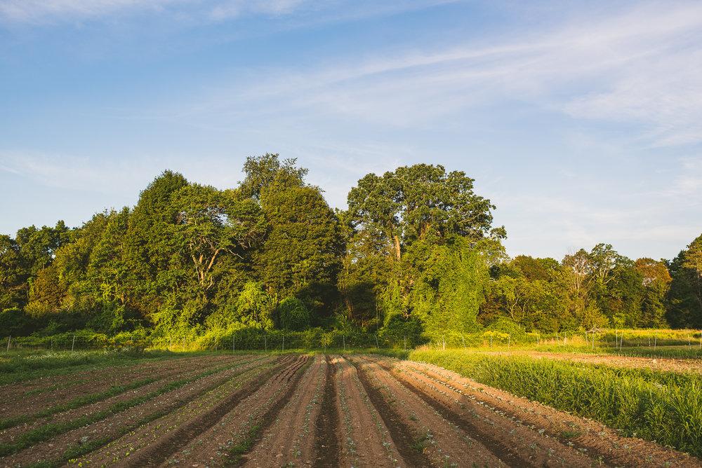 Eustis Estate Farm - Edible Boston-4_WEB.jpg