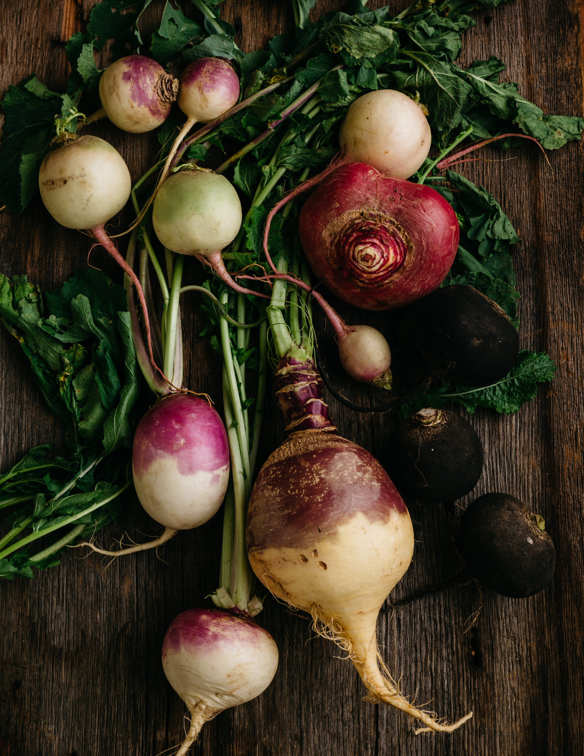 Planting turnips and radishes in 2018