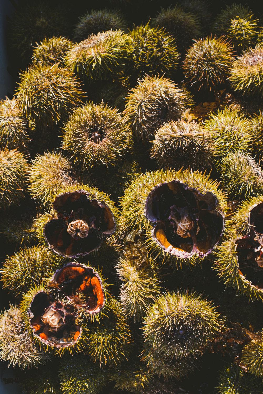 sea urchin Edible Boston-13_WEB.jpg