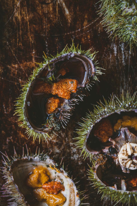 sea urchin Edible Boston-15_WEB.jpg