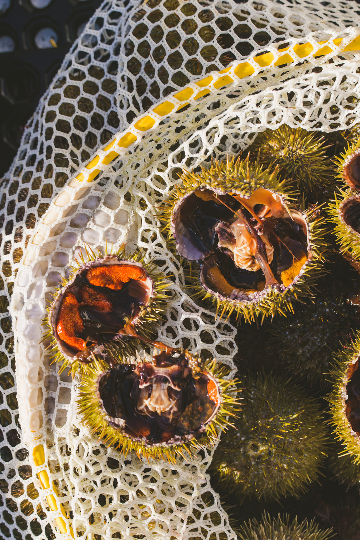 sea urchin Edible Boston-28_WEB.jpg