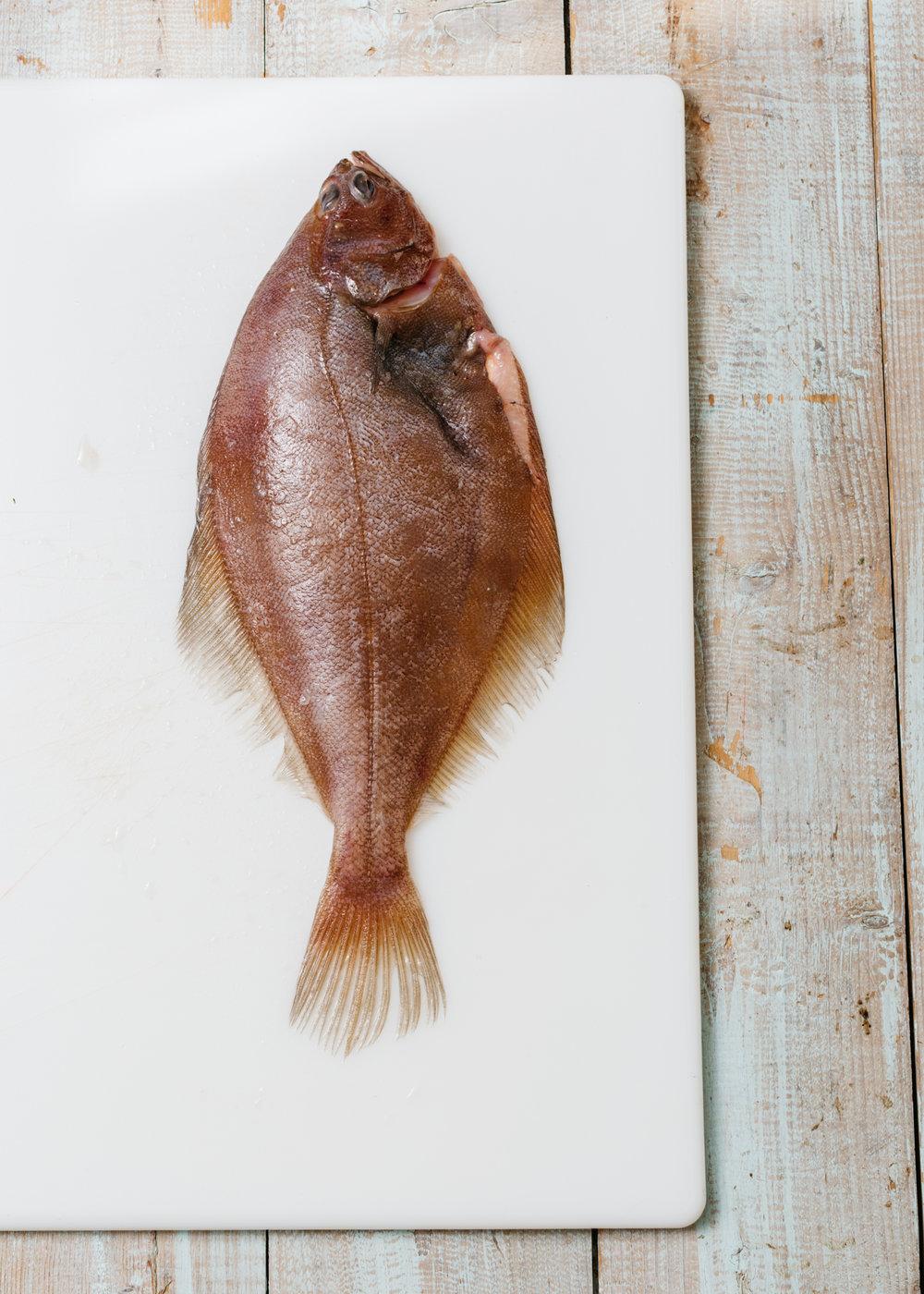 Flounder_Fennel-3472_WEB.jpg