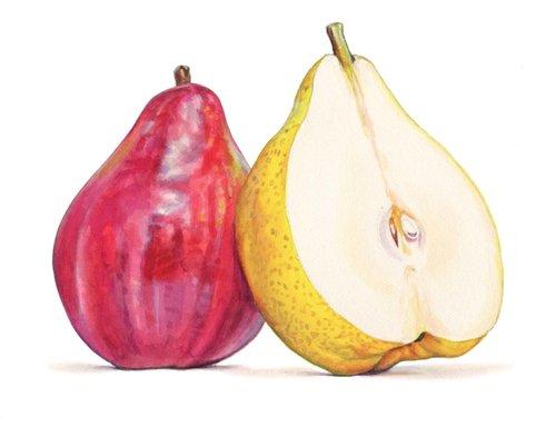 pears illustration.jpg