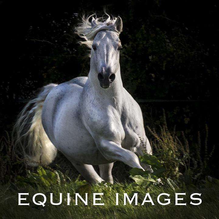 EquineSales_5R.jpg