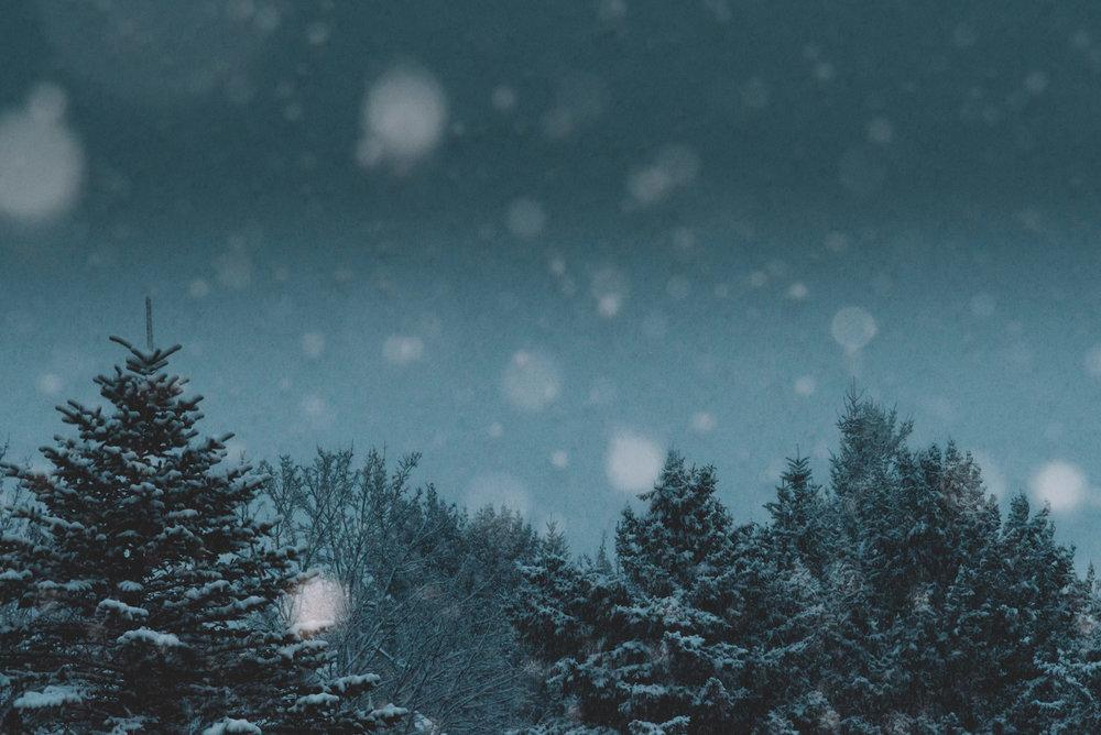 180218_Snow&Trees_pb-web.jpg