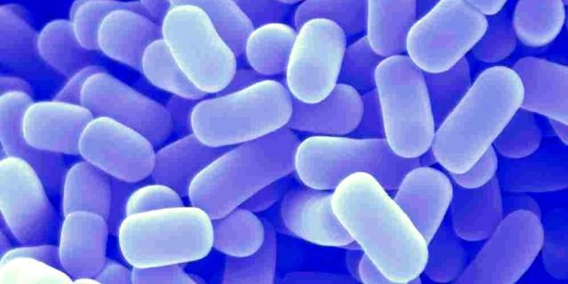 Manfaat-Lactobacillus-Acidophilus.jpg