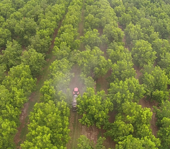 Drone view of Pecan Sprayer in Pecan Orchard