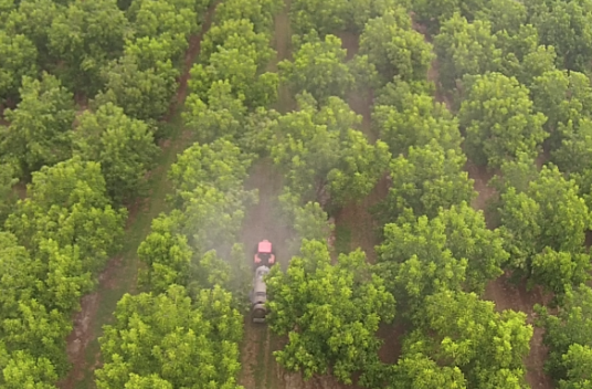 pecan spraying, drones in pecans