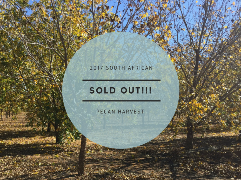 South African pecan harvest 2017