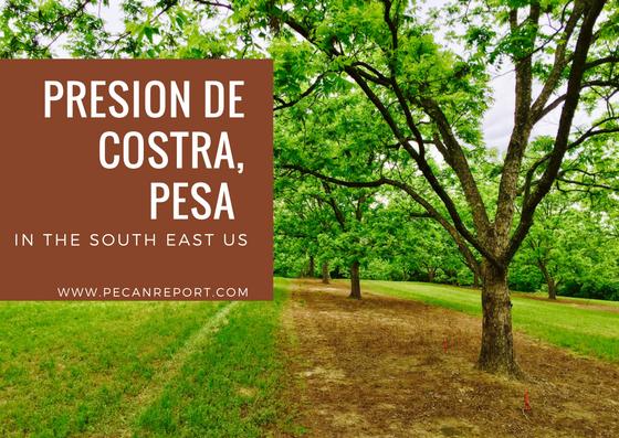 PRESION DE COSTRA, PESA