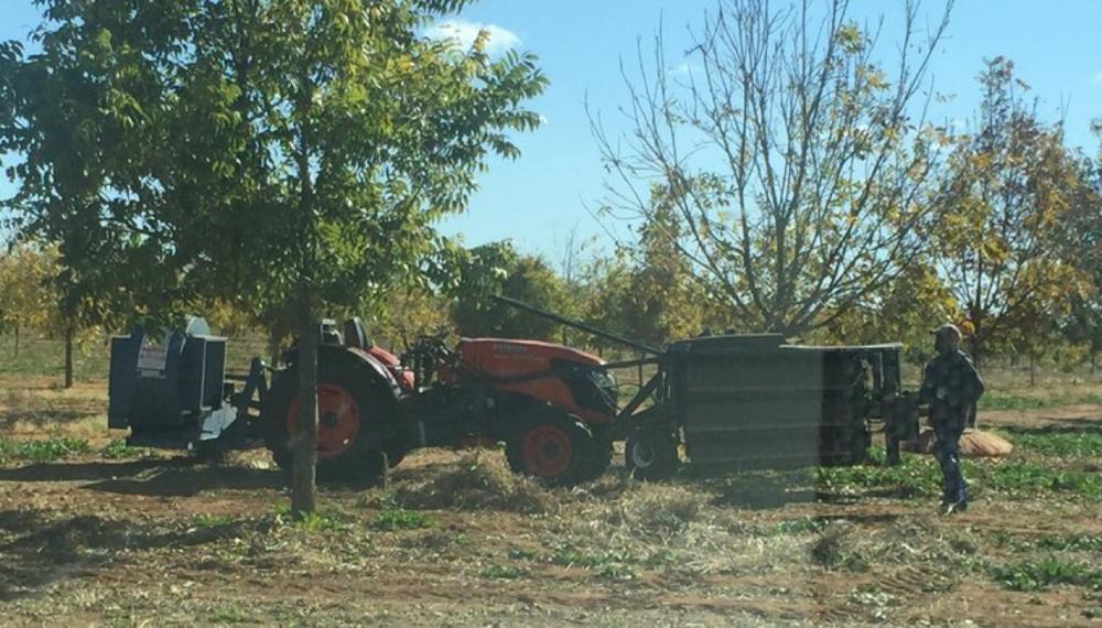 SA Harvest.png