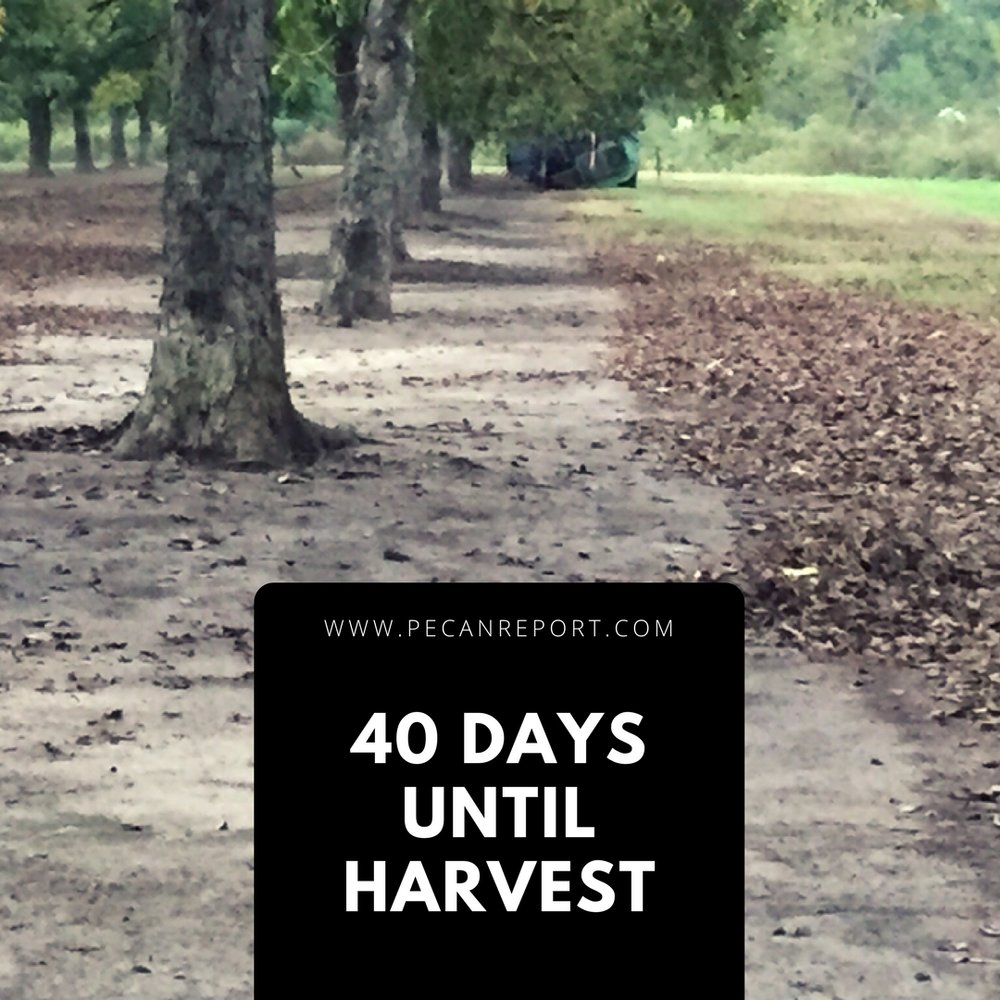 2017 pecan harvest