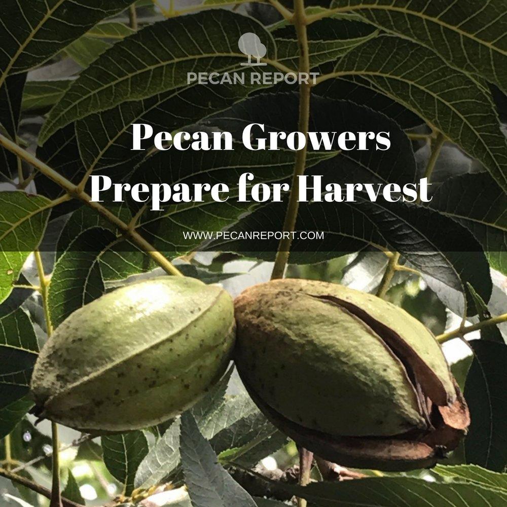 Pecan nut growers