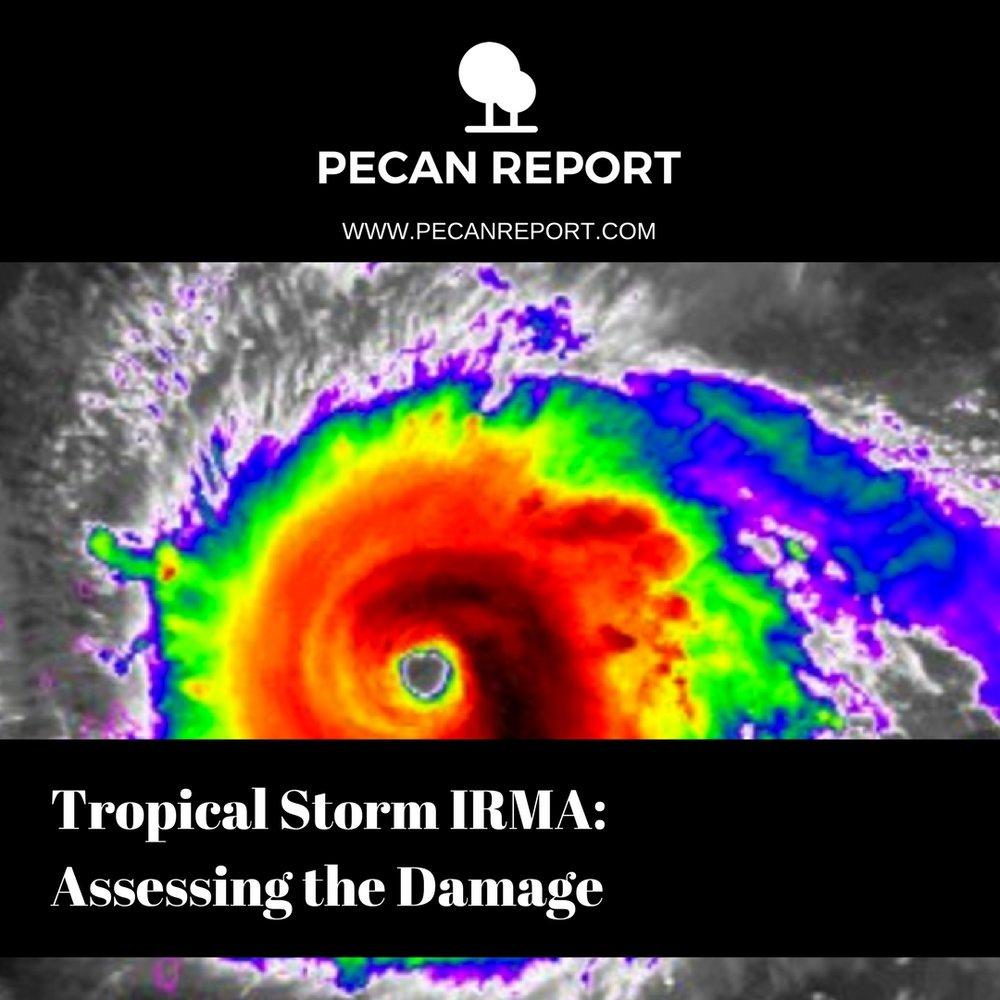 Hurricane Irma pecan crop.jpg