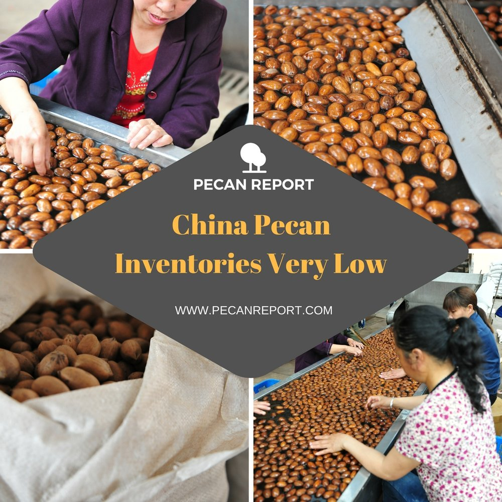 CHINA PECAN INVENTORIES VERY LOW.jpg