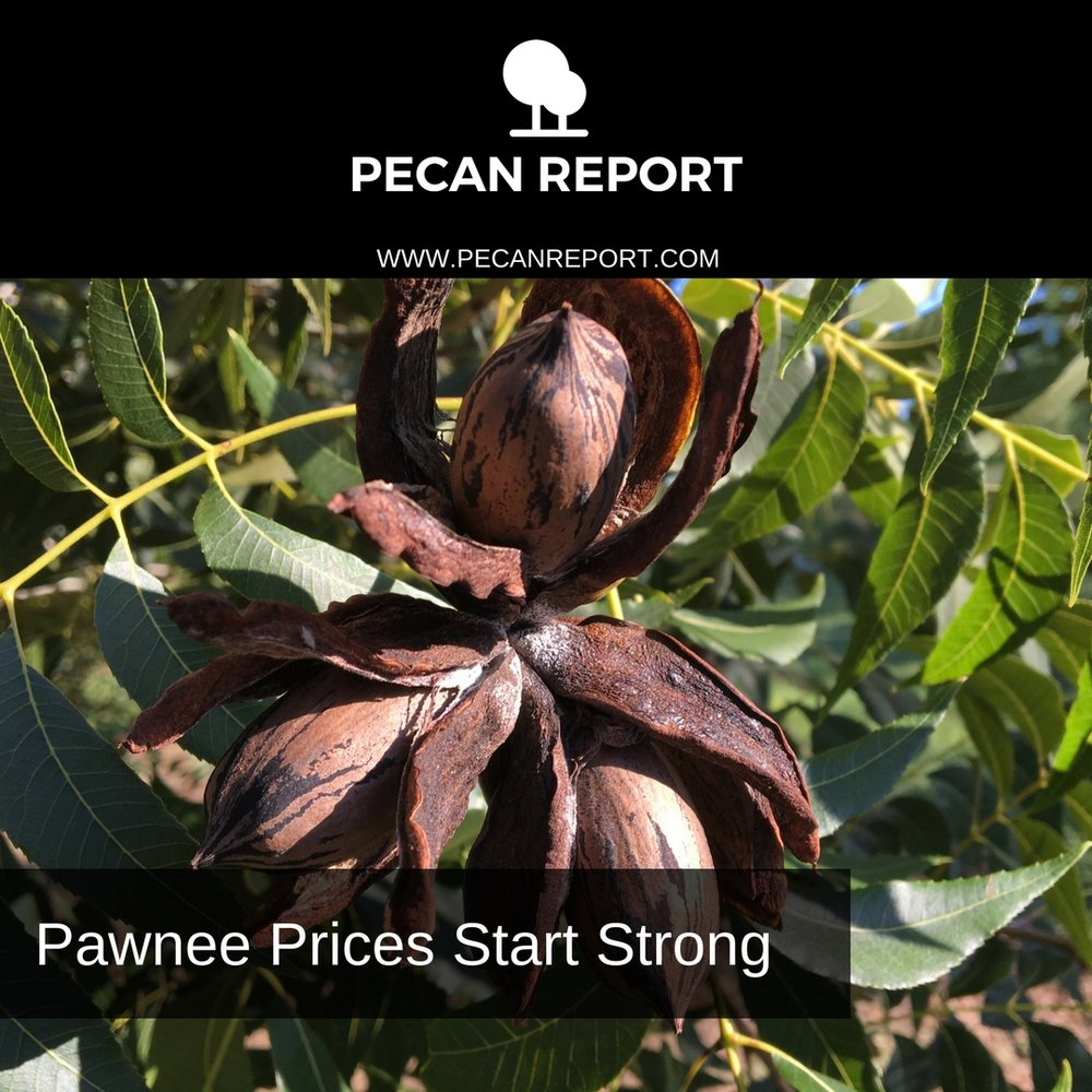 Pawnee Pecan Prices Start Strong.jpg