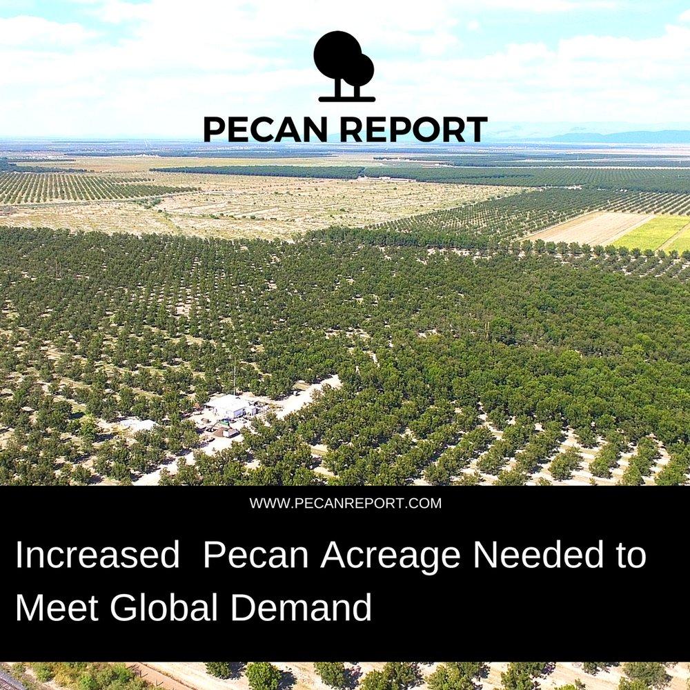 Increased Pecan Acreage Needed.jpg