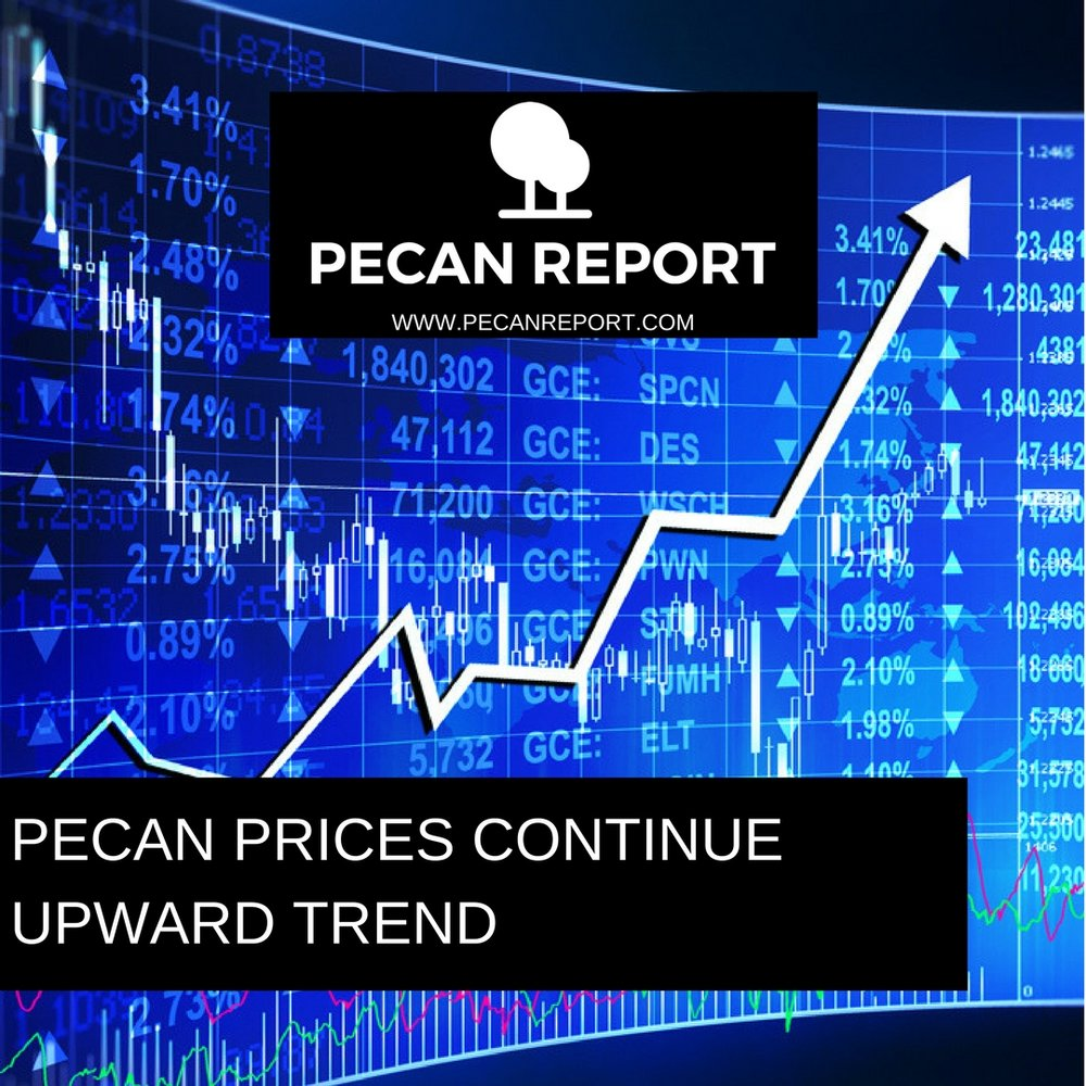 PECAN PRICES CONTINUE UPWARD TREND.jpg