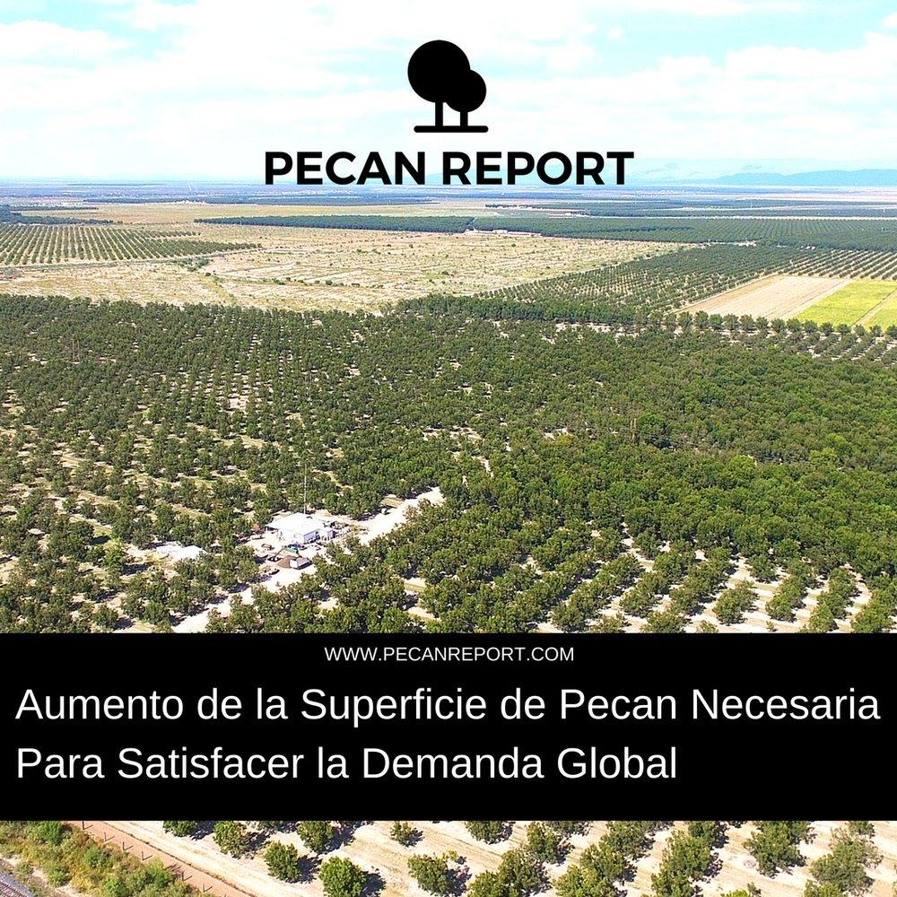 Aumento de la superficie de Pecan necesaria para satisfacer la demanda global.jpg