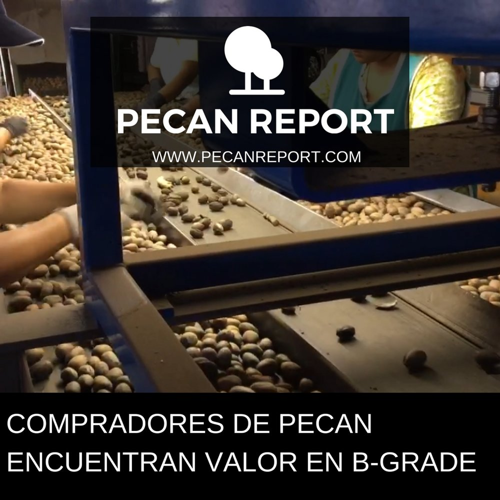 COMPRADORES DE PECAN ENCUENTRAN VALOR EN B-GRADE.jpg