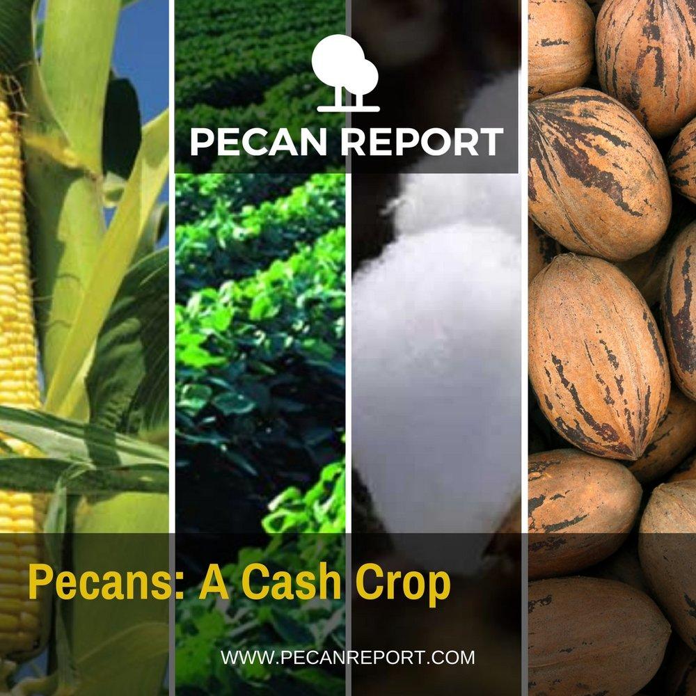 Pecans- A Cash Crop.jpg