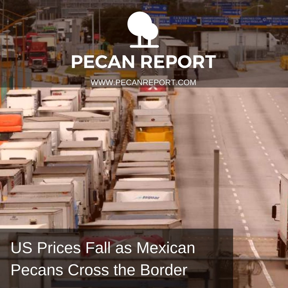 US Prices Fall as Mexican Pecans Cross the Border.jpg