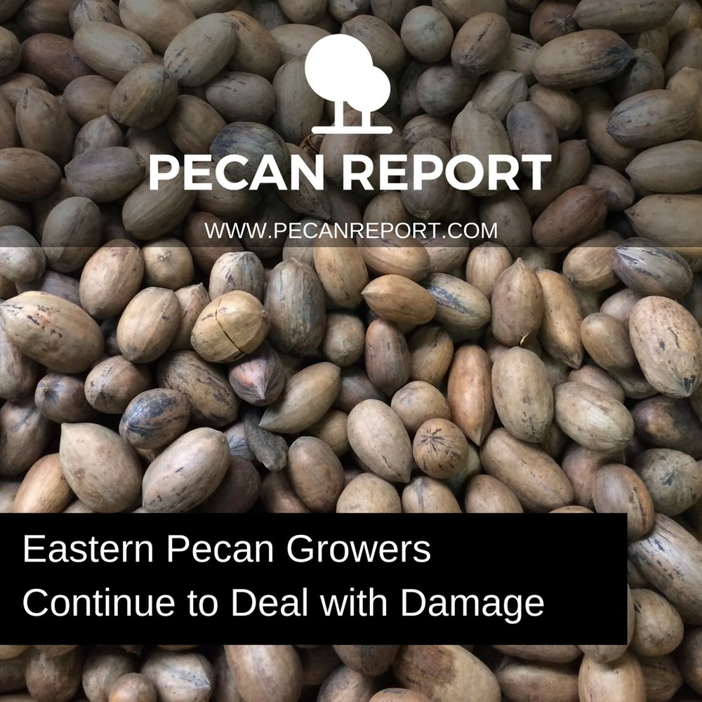Eastern Pecan Growers Deal with damage.jpg