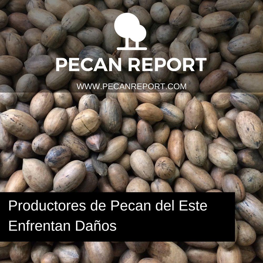 Productores de Pecan del Este enfrentan daños.jpg