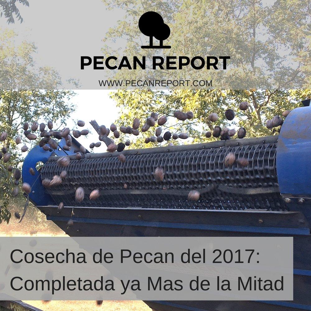 Cosecha de Pecan del 2017_ Completada ya Mas de la Mitad.jpg