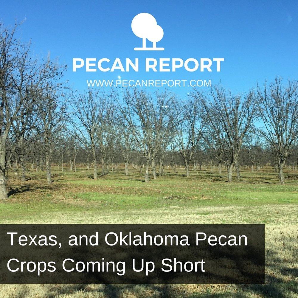 Texas Pecans.jpg