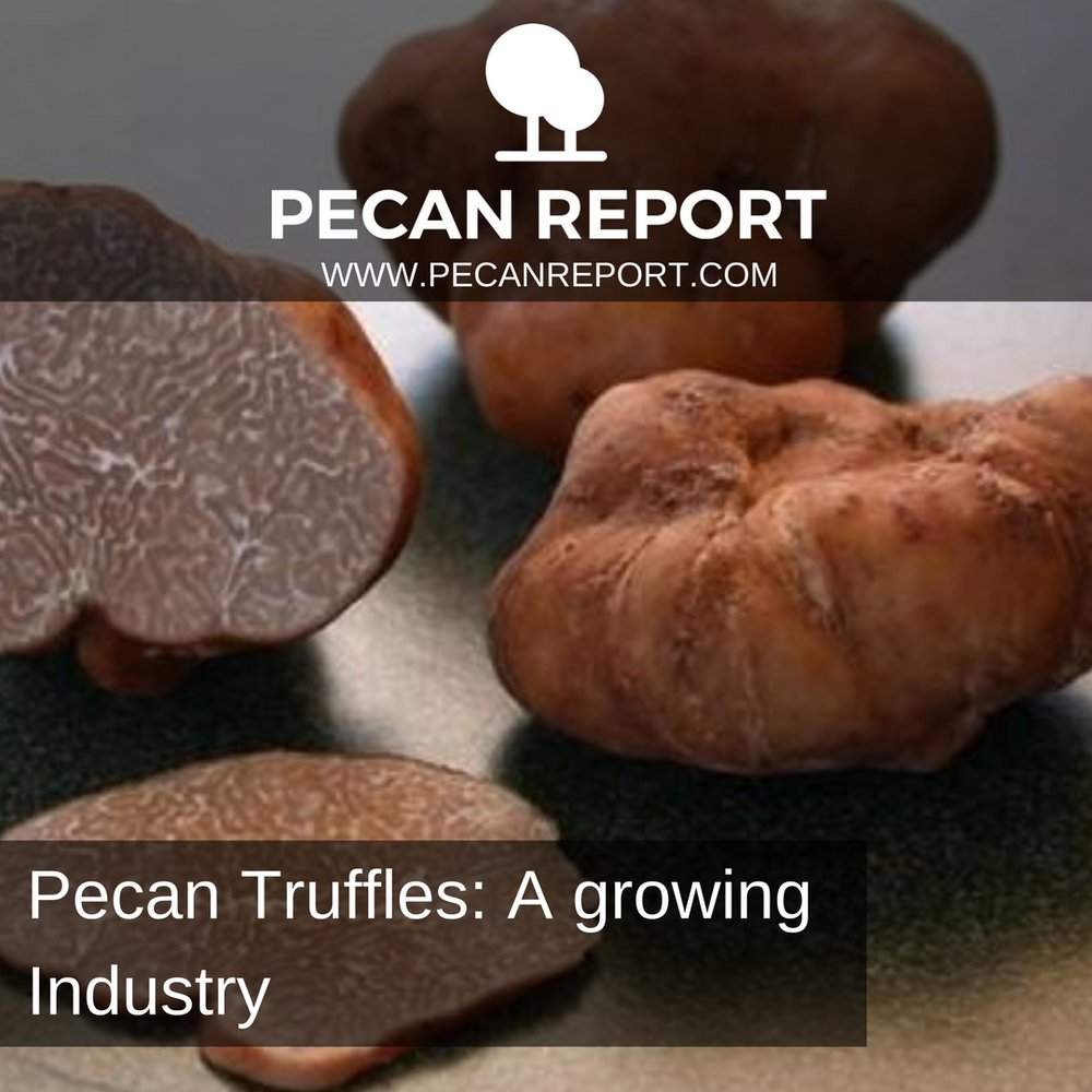 Pecan Truffles_ A growing Industry.jpg