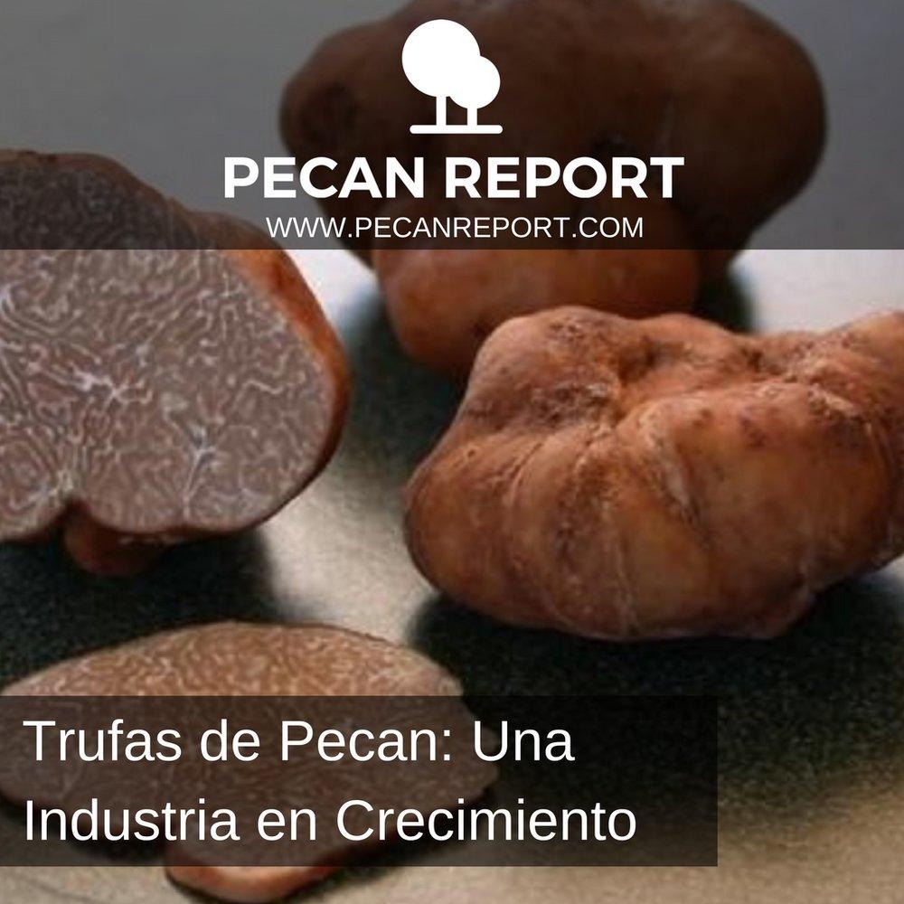 Trufas de Pecan_ Una Industria en crecimiento.jpg