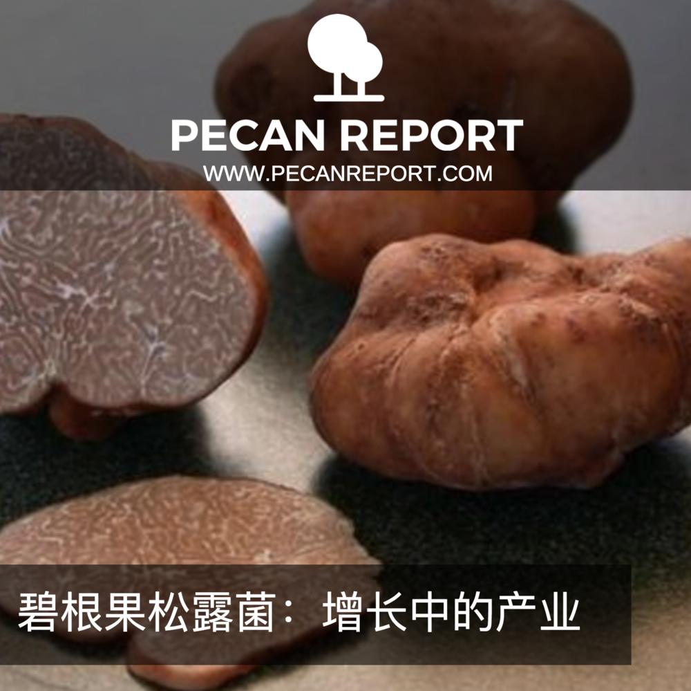碧根果松露菌:增长中的产业.png