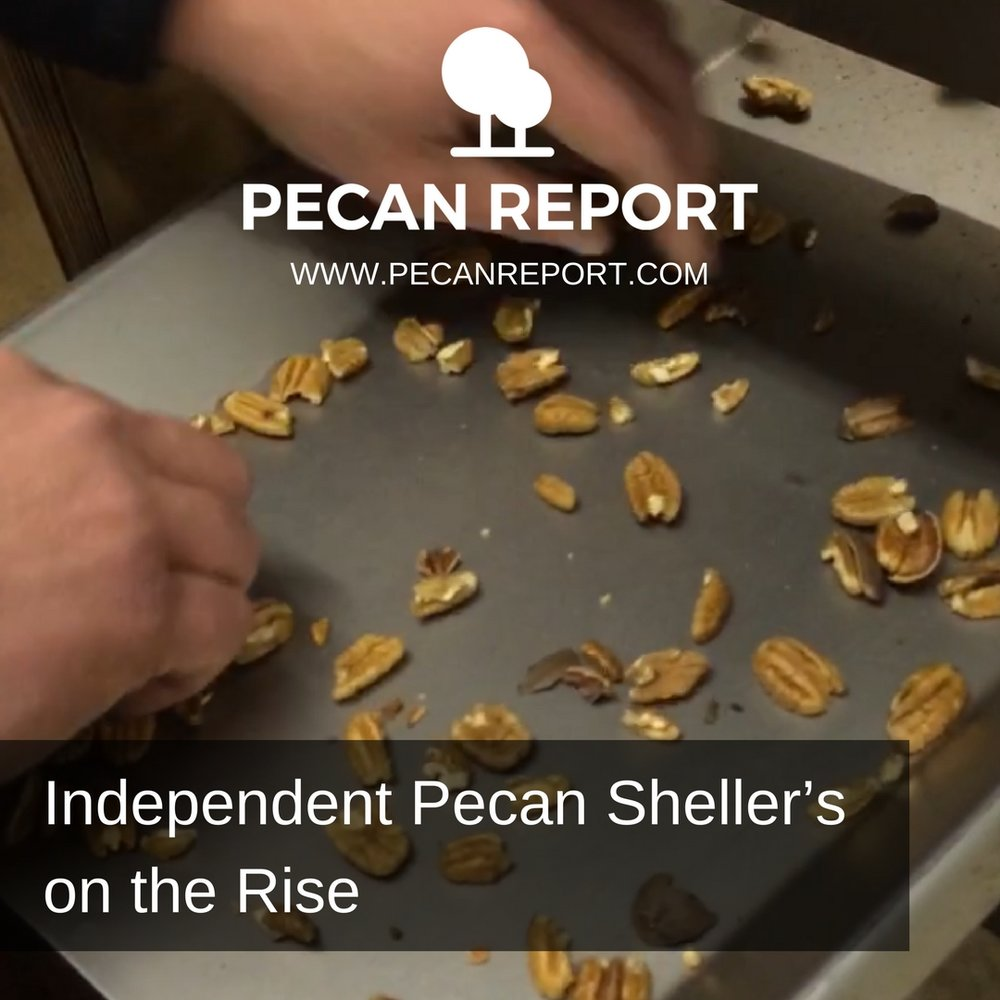 Independent Pecan Sheller's on the Rise.jpg