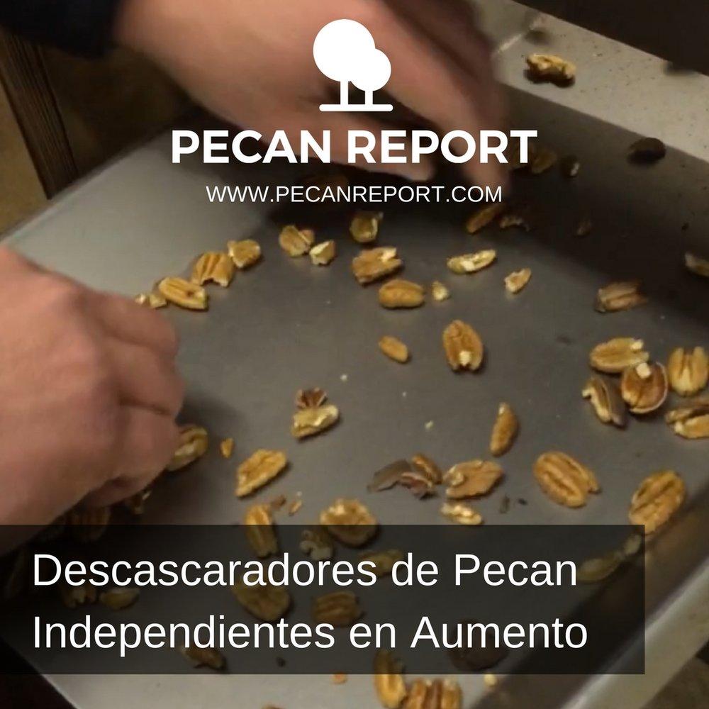 Descascaradores de Pecan Independientes en Aumento.jpg
