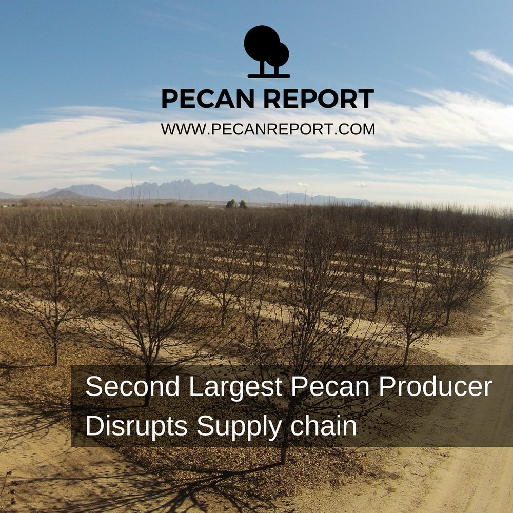 pecan weevil - new mexico pecans.jpg
