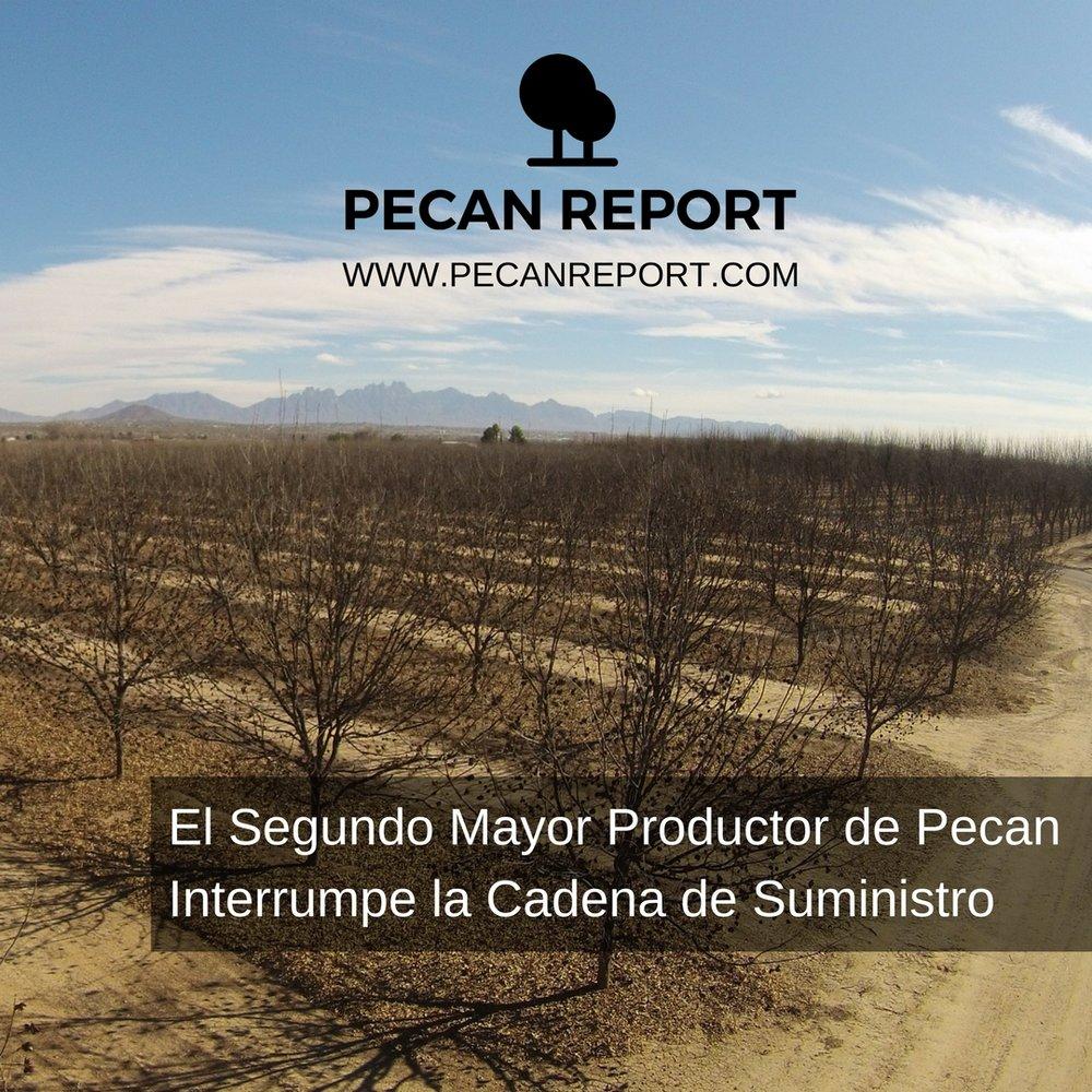 El segundo mayor productor de Pecan interrumpe la cadena de suministro.jpg