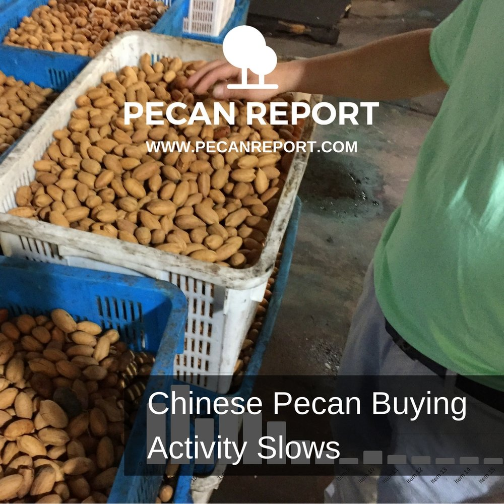 Chinese Pecan Buying Activity Slows.jpg
