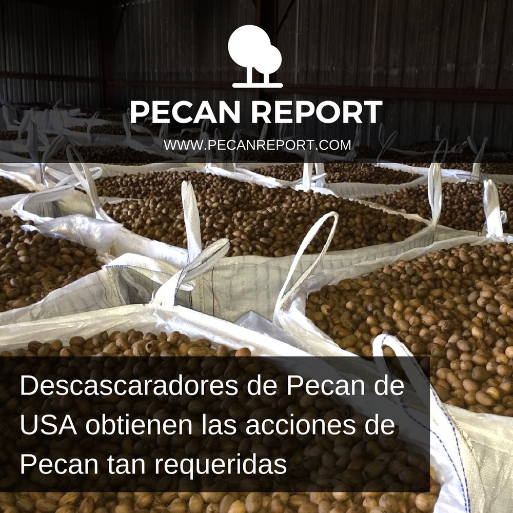 Descascaradores de Pecan de USA obtienen las acciones de Pecan tan requeridas.jpg