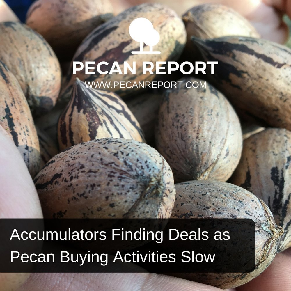 Accumulators Finding Deals as Pecan Buying Activities Slow.jpg