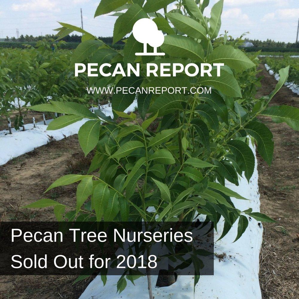 Pecan Tree Nurseries Sold Out for 2018.jpg
