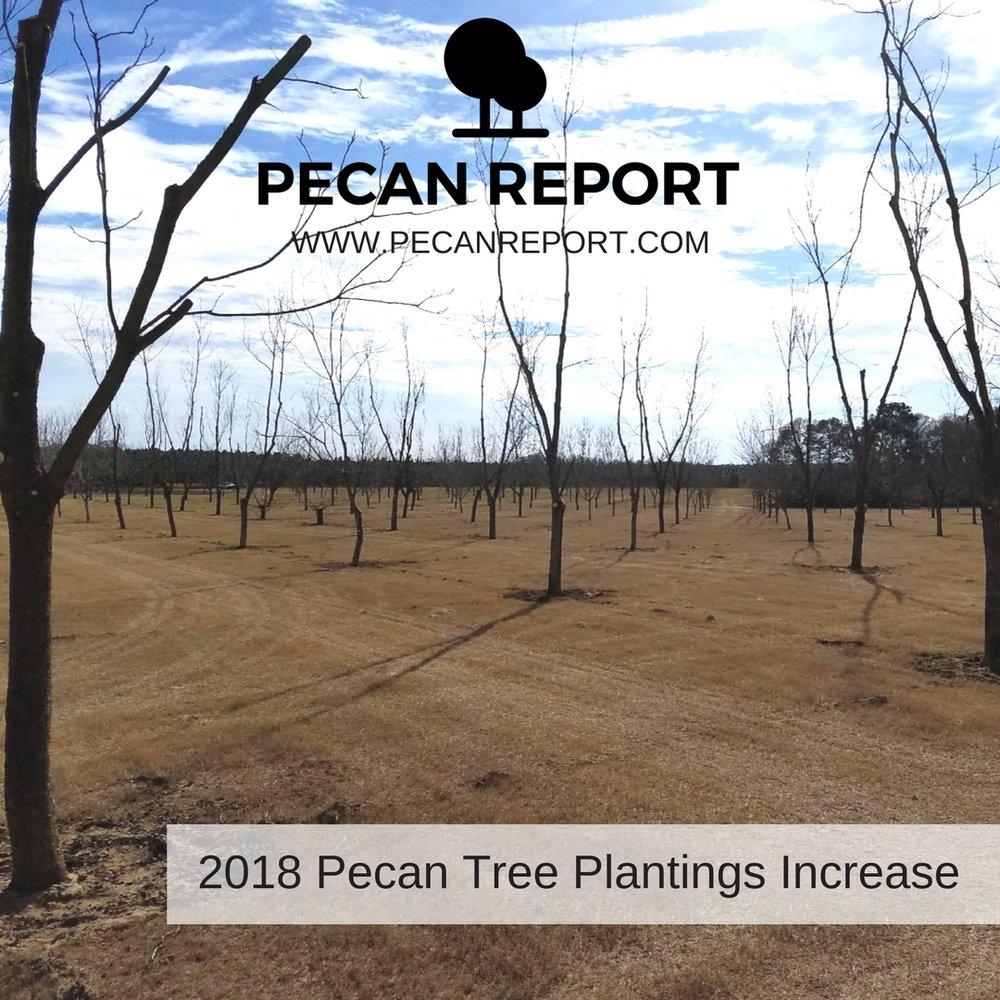 2018 Pecan Tree Plantings Increase.jpg